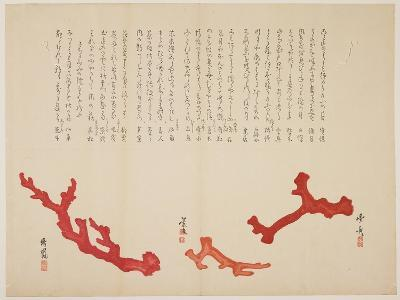 Three Branches of Coral, C. 1818-1829- Toyohiko-Giclee Print