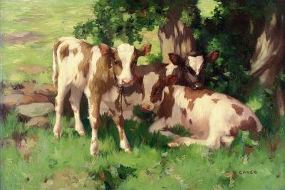 Three Calves in the Shade of a Tree-David Gauld-Giclee Print