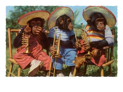 Three Chimpanzees with Brass Instruments and Hats--Art Print