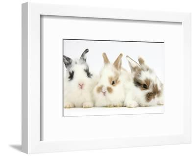 Three Cute Baby Bunnies Sitting Together-Mark Taylor-Framed Photographic Print
