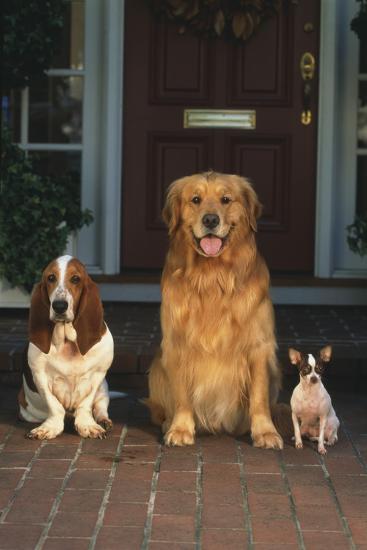 Three Dogs on Porch-DLILLC-Photographic Print