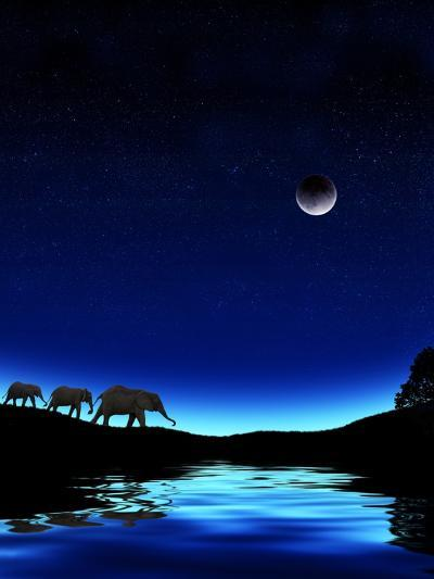 Three Elephants Walking Past Water-Mike Agliolo-Photographic Print