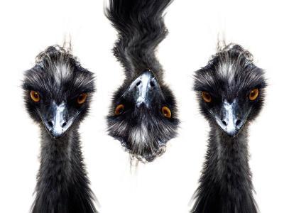 Three Emus-Abdul Kadir Audah-Photographic Print