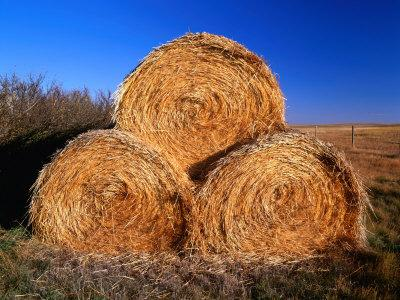 https://imgc.artprintimages.com/img/print/three-hay-bales-on-farm-in-red-river-valley-alberta-canada_u-l-p4fxap0.jpg?p=0