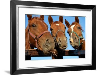 Three  Heads of a Horses-Meggj-Framed Photographic Print