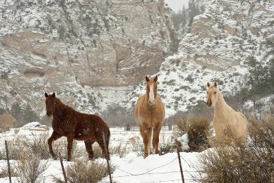 Three Horses in Pasture with Snow, Near Kanab, Utah-Howie Garber-Photographic Print