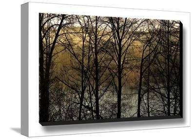 Three Imagenings-Charles Britt-Stretched Canvas Print
