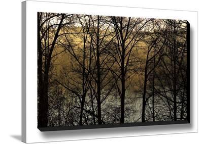 Three Imagenings-Charles Britt-Stretched Canvas Print