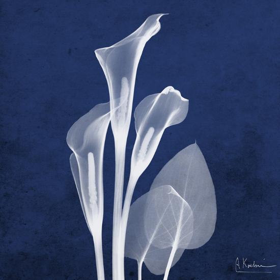 Three Indigo Calla Lilies-Albert Koetsier-Premium Giclee Print