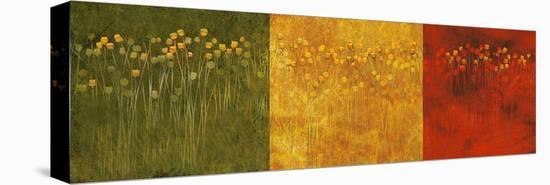 Three Jack Poppies--Stretched Canvas Print