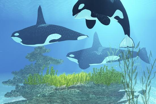 Three Killer Whales Pass over a Reef on a Journey to Find their Next Prey-Stocktrek Images-Art Print