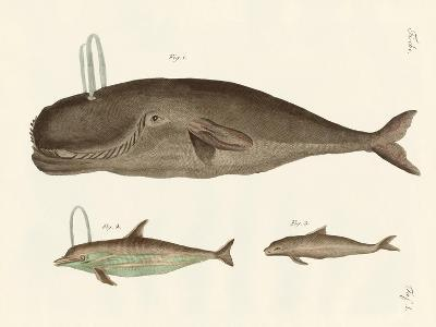 Three Kinds of Whales--Giclee Print