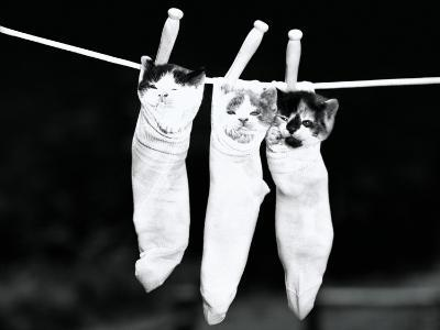 Three Kittens in Socks, Hanging From Clothes Line-H^ Armstrong Roberts-Photographic Print