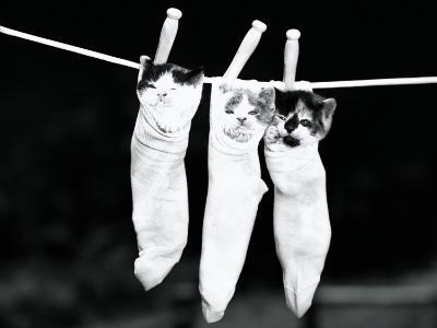 Three Kittens in Socks-H^ Armstrong Roberts-Photographic Print
