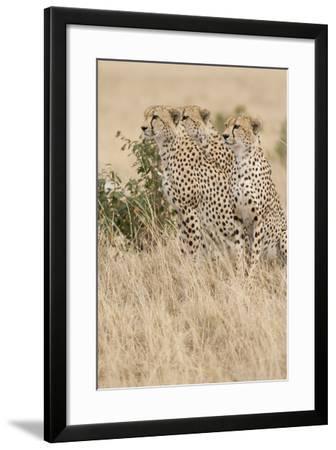 Three of a Kind-Susann Parker-Framed Photographic Print