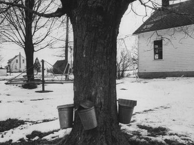 Three Pails Laying Against the Tree for Catching Maple Being Tapped in the Catskill Mt. Region-Richard Meek-Photographic Print