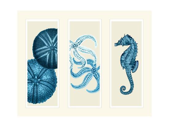 Three Panel Print Sea Urchin Starfish and Seahorse in Blue-Fab Funky-Art Print