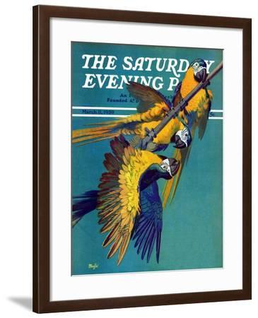 """""""Three Parrots,"""" Saturday Evening Post Cover, March 11, 1939-Julius Moessel-Framed Giclee Print"""