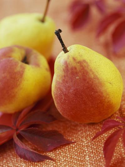 Three Pears-Vladimir Shulevsky-Photographic Print