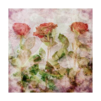 Three Roses-Alaya Gadeh-Art Print