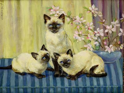Three Siamese Cats-Winifred Humphery-Giclee Print