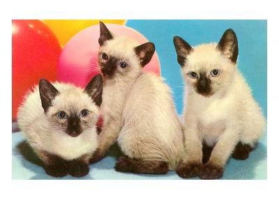 Three Siamese Kittens--Art Print