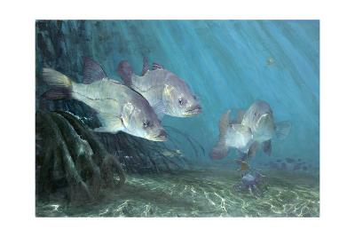 Three Snook in Mangroves, 2002-Stanley Meltzoff-Giclee Print