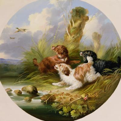 Three Spaniels Flushing Mallard-George Armfield-Giclee Print