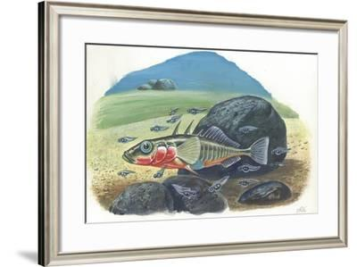 Three-Spined Stickleback Gasterosteus Aculeatus, Male with Fries--Framed Giclee Print