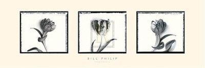 https://imgc.artprintimages.com/img/print/three-tulips-ii_u-l-f10ews0.jpg?p=0