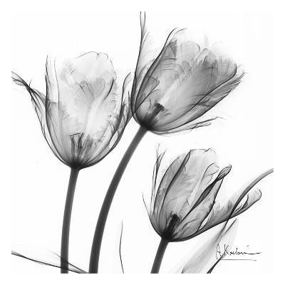 Three Tulips in Black and White-Albert Koetsier-Art Print