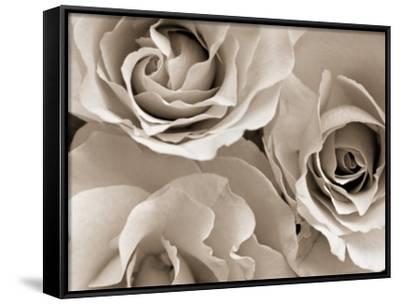 Three White Roses-Robert Cattan-Framed Canvas Print