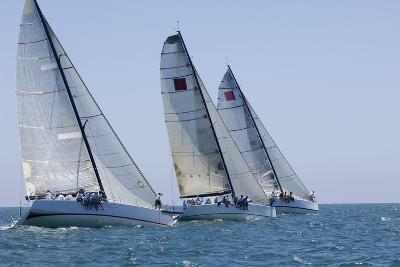 Three Yachts Compete in Team Sailing Event, California--Photo