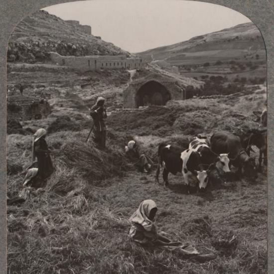 'Threshing grain near Jacob's Well', c1900-Unknown-Photographic Print