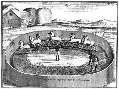 https://imgc.artprintimages.com/img/print/threshing-out-the-corn-south-africa-18th-century_u-l-ptm3ty0.jpg?p=0