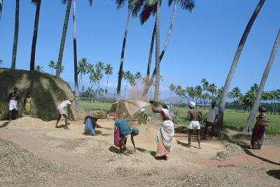 Threshing Rice, Near Madurai, Tamil Nadu, India-Vivienne Sharp-Photographic Print