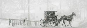 Through a Driving Snow Storm, an Amish Buggy Travels Along a Road in Parkman, Ohio