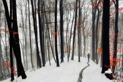 Through Autumn and Winter- Samanta-Photographic Print