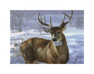 Through My Window: Whitetail Deer-Joni Johnson-godsy-Art Print