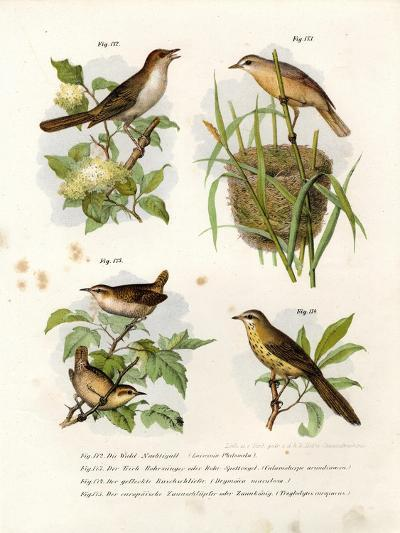 Thrush Nightingale, 1864--Giclee Print