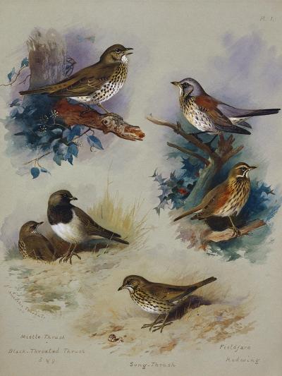 Thrushes-Archibald Thorburn-Giclee Print