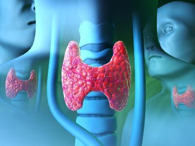 Thyroid Gland-David Mack-Photographic Print