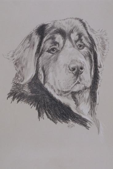 Tibetan Mastiff-Barbara Keith-Giclee Print