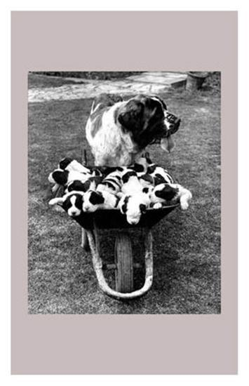 Tich and Pups Getting Around--Art Print
