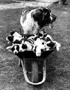 Tich and Pups Getting Around