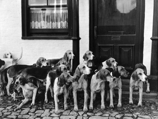 Tickham Foxhounds--Photographic Print