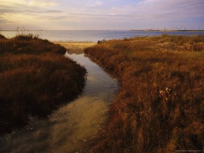 Tidal Creek Through Salt Marsh Grasses-Raymond Gehman-Photographic Print