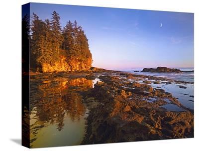 Tide Pools, Botanical Beach, Juan de Fuca Provincial Park, Vancouver Island, BC, Canada-Tim Fitzharris-Stretched Canvas Print