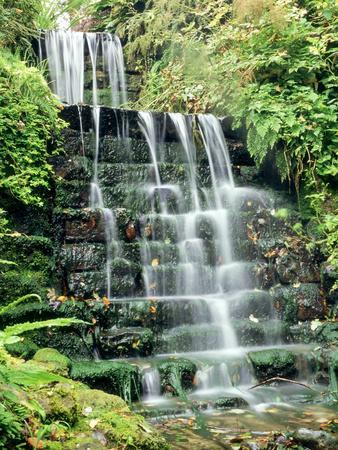 https://imgc.artprintimages.com/img/print/tiered-waterfall-moss-lichen-ferns_u-l-q10r2s70.jpg?p=0