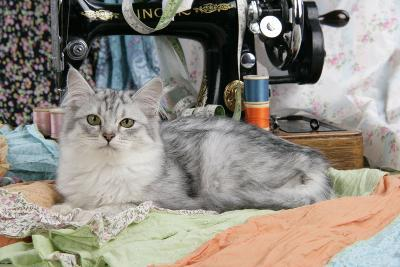 Tiffanie with Sewing Machine--Photographic Print